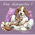Bonjour, bon dimanche  toutes et tous