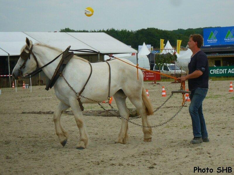 Cerise 33 - Concours d'Utilisation - Tilloy les Mofflaines (62) - 13 juin 2014 - photo SHB