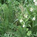 3 plantes pour un bon purin : prêle, consoude et ortie