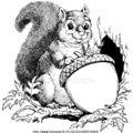 Amertume suite : muk de glands de chêne et thé kuding