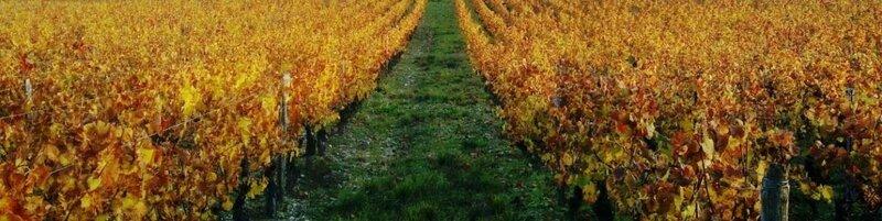 Vignoble Châtillonnais