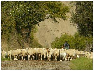 moutons_et_berger_Aragon