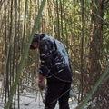 Opération bambous