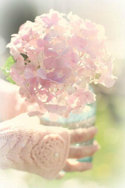 bouquet rose au coeur de l'hiver