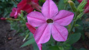 Fleurs012 (100)