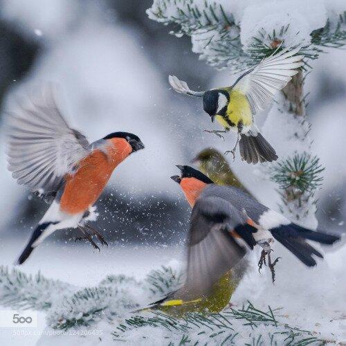 J'aime ces beaux oiseaux.