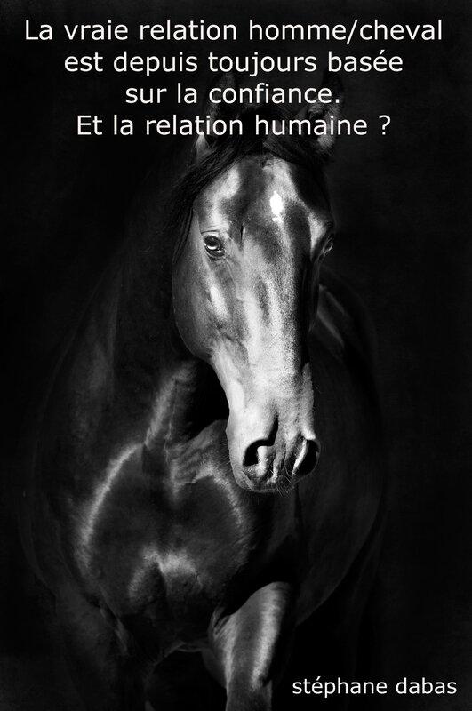 relation humaine par le cheval