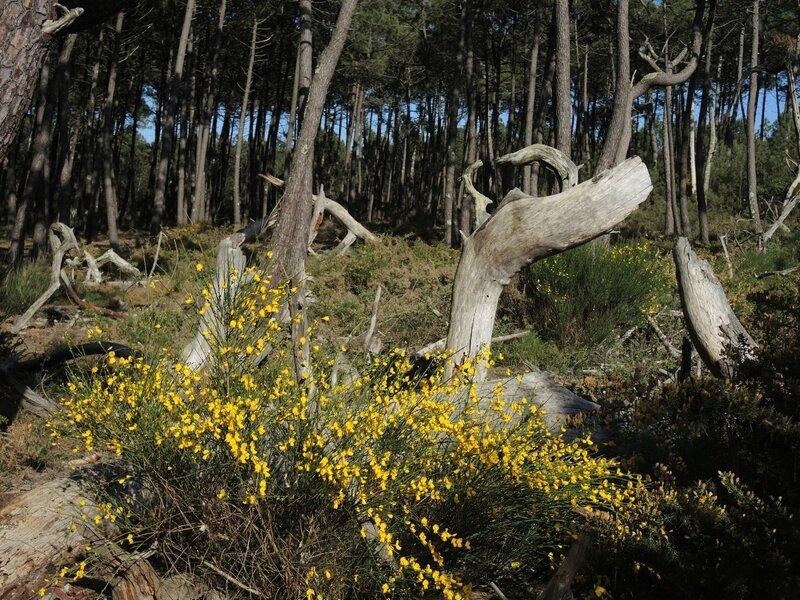 Huchet, sentier découverte, forêt