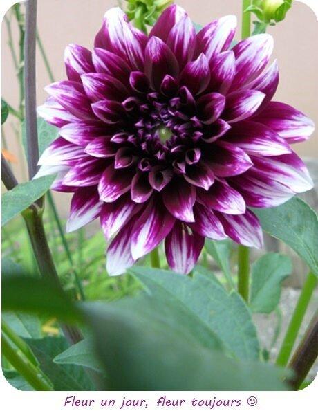 Quartier Drouot - Fleur du jardinet
