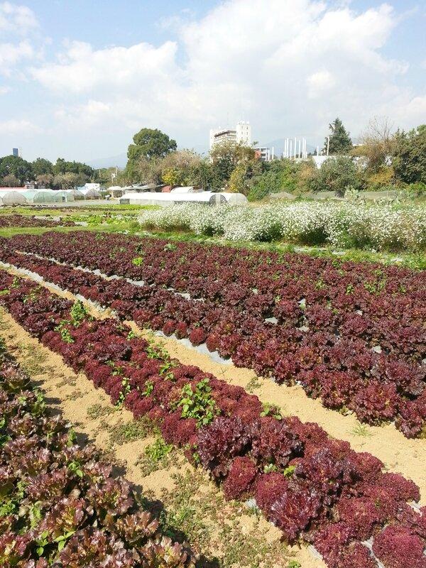 jardins de l'université (11)