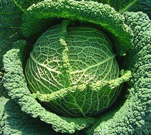 Feuilles de chou et montee de lait le t tou blog - Comment cuisiner les feuilles de betterave rouge ...