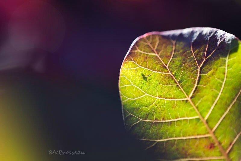 feuilles-automne17-01