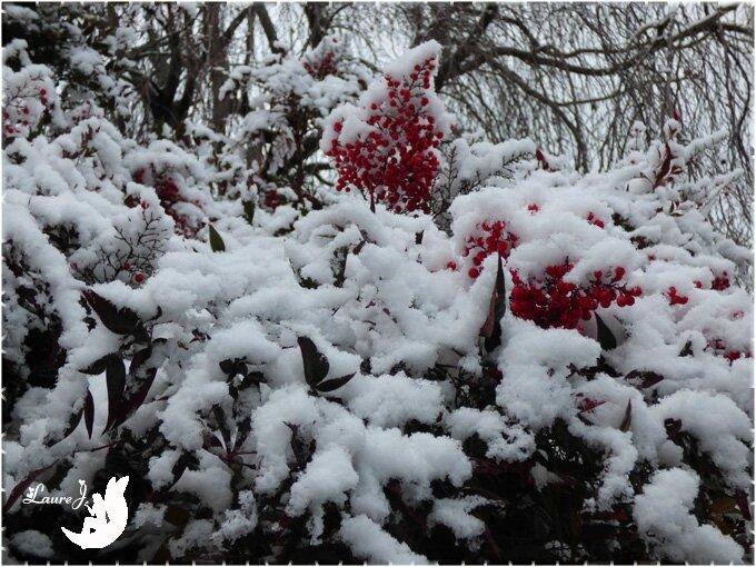 1ere neige 2017 17
