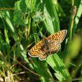 Dans les champs, un papillon