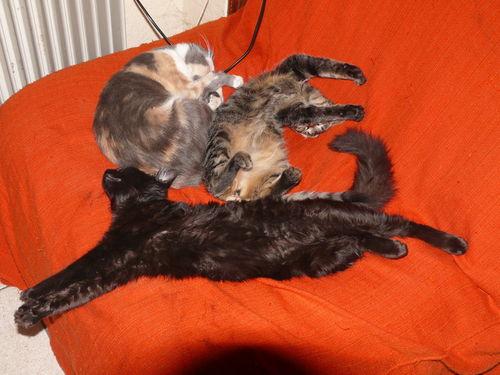 2008 11 02 Les chats qui dorment d'une drôle de facon