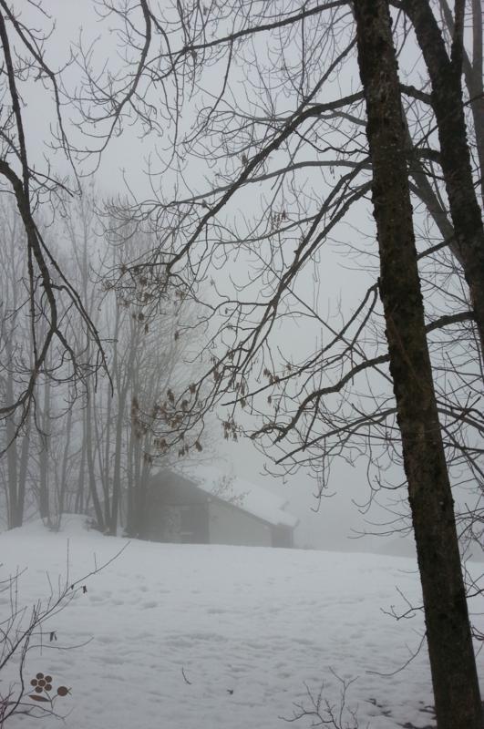 Forêt & brouillard_3