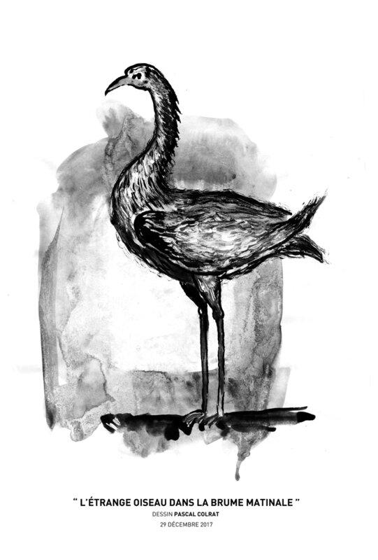 __l_e_trange_oiseau__dans_la_brume_matinale__