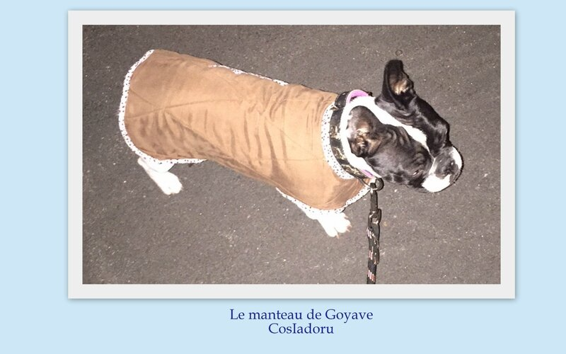 Le manteau de Goyave8