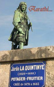 Quintinie