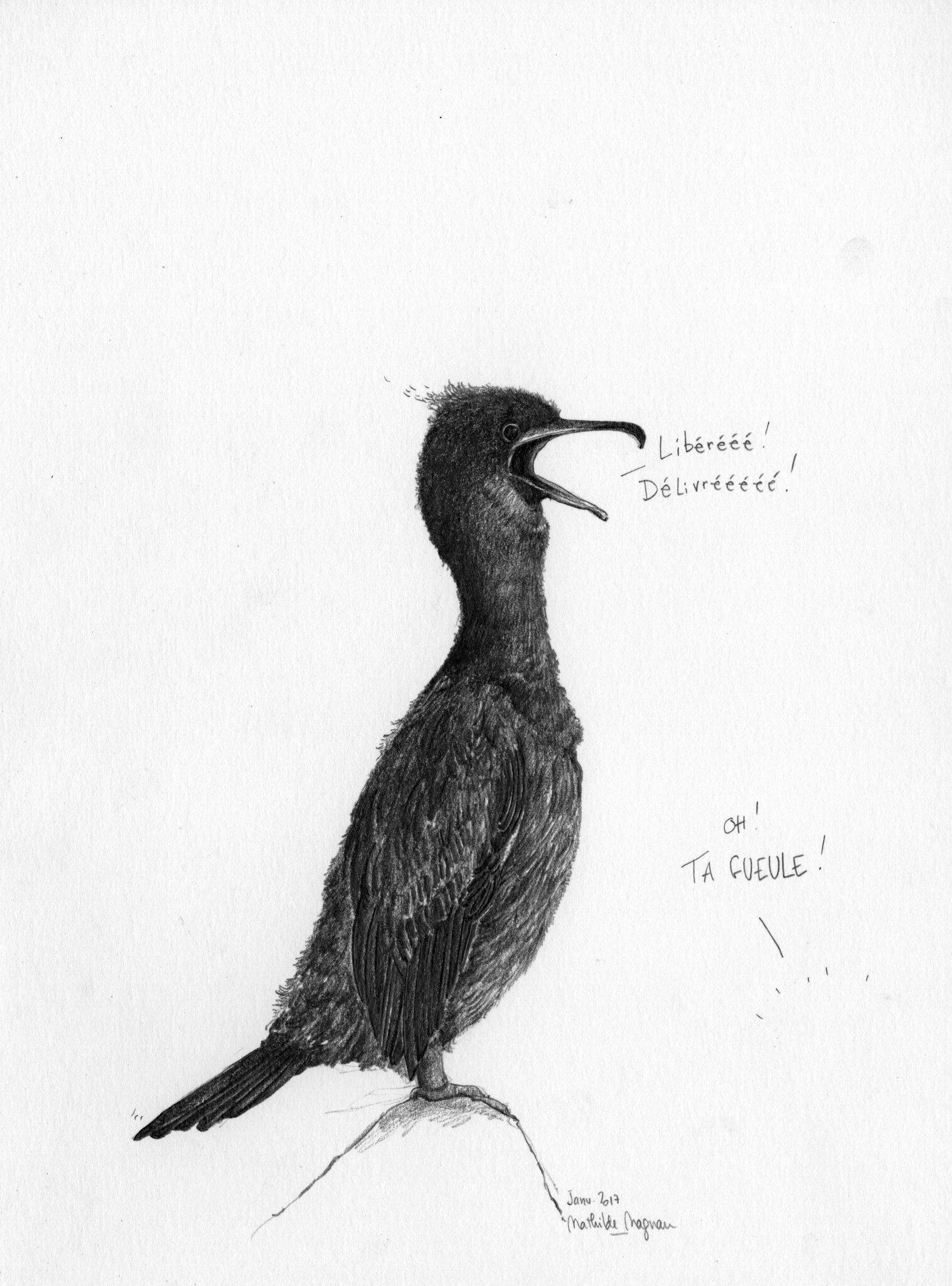 Cormoran des neiges