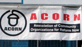 acorn-270x157
