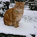 Beau chat dans la neige ?