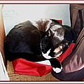 Patachon rêve de voyages - Le sommeil - Sieste félin - Chat noir et blanc dort sur sacs