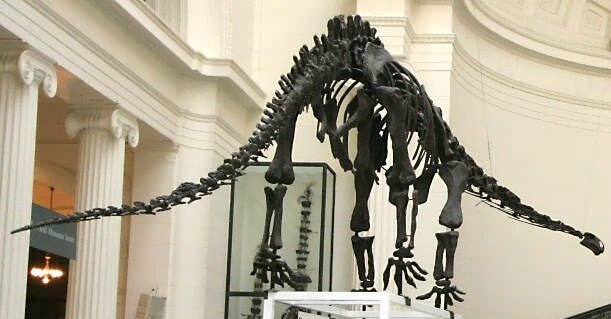 Mamenchisaurus,_Field_Museum