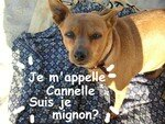 cannelle_022