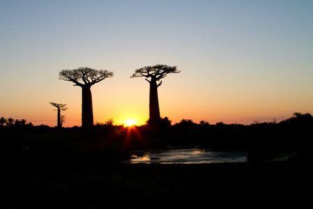 paysage-baobabs-2