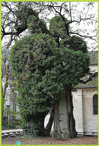 square rene viviani arbre 4