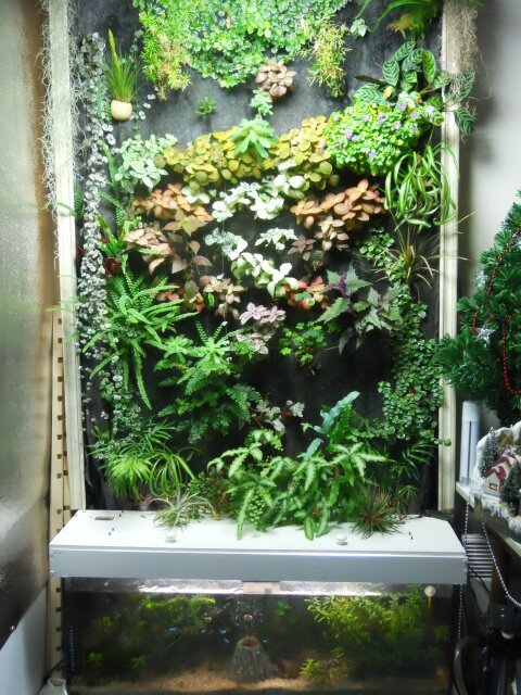 Fabrication mur v g tal 1 re cr ation le blog d 39 olivetzou - Mur vegetal interieur diy ...