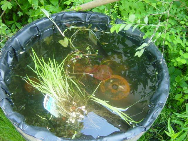 Petit bassin photo de notre jardin our garden notre for Petit bassin de terrasse