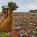 Yemen-ile-Socotra-paysages-decouverte