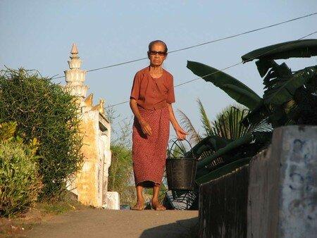 Birman_100___8_