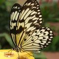 Papillon - Serre aux papillons du Parc Floral de La Source à Orléans
