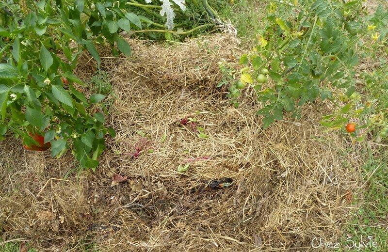 Potager permaculture septembre04