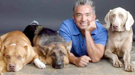 cesar-millan-and-dogs