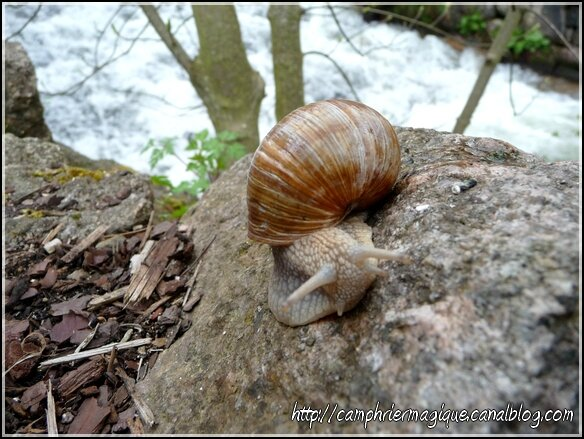 escargot printemps 2016