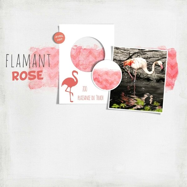 17-04 flamant rose