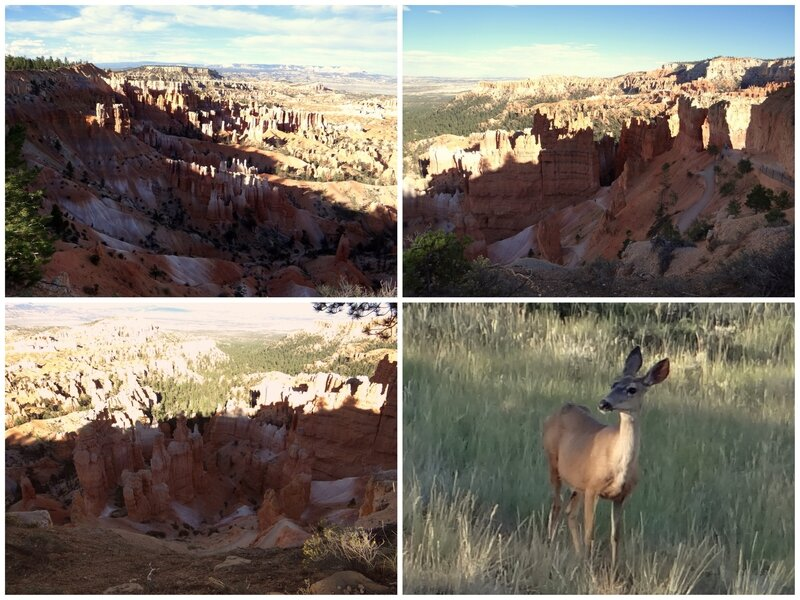 JOUR 6 MOAB CAPITOL REEF BRYCE CANYON23