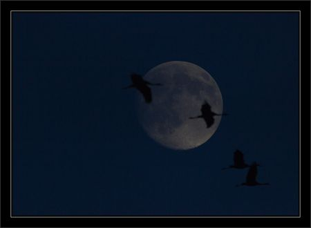 Montier_lulu_grues_lune_nuit_2_191110