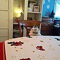 Un dimanche matin chez la folle aux chats