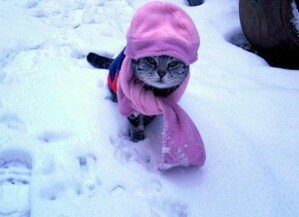 chat-neige3