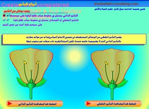khsibafleur8_frame1