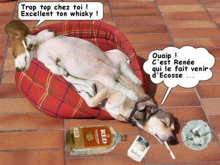 Tom_d_vergond__avec_chien_avec_texte
