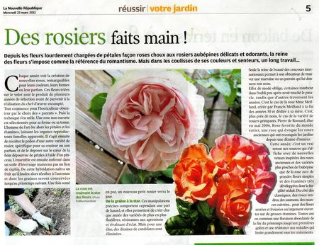 article_rose152
