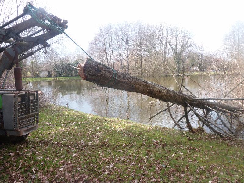 14mars-abattage arbres (54)