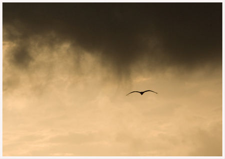 heron_nuages_brume_matin_dec_190808