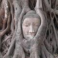 AYUTHAYA : Boudha sculpté dans le bois